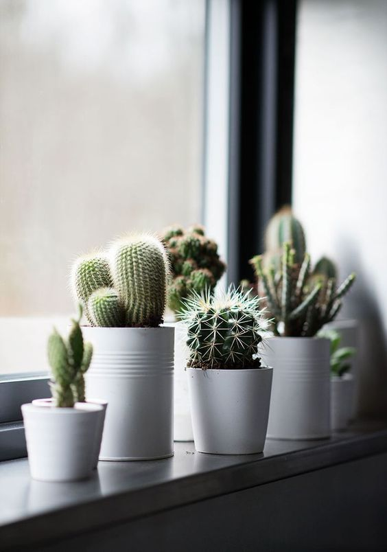 decoracion reciclada para habitaciones con plantas