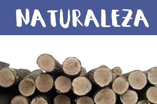 Manualidades de Naturaleza