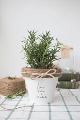 regalos originales con plantas