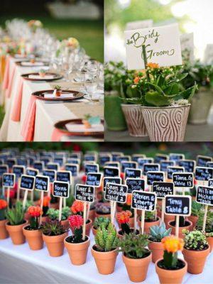 Cactus y plantitas como detalle para invitados.