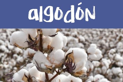 Manualidades con el algodón.